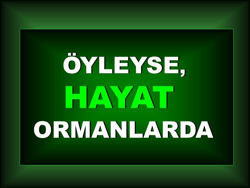ÖYLEYSE, HAYAT ORMANLARDA