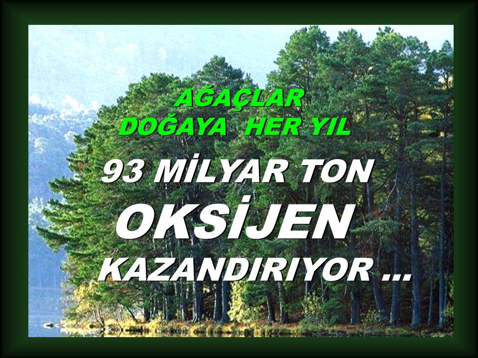 AĞAÇLAR DOĞAYA HER YIL 93 MİLYAR TON OKSİJEN KAZANDIRIYOR ...