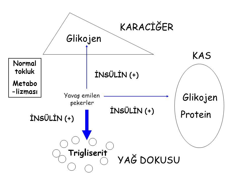KARACİĞER Glikojen KAS Glikojen Protein YAĞ DOKUSU Trigliserit