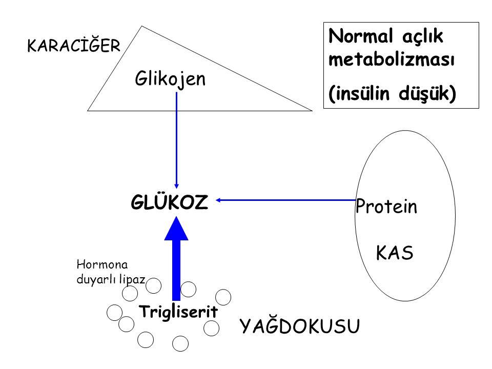 Normal açlık metabolizması (insülin düşük) Glikojen