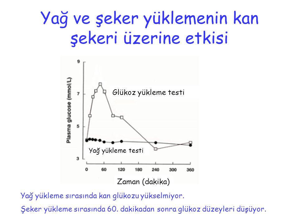 Yağ ve şeker yüklemenin kan şekeri üzerine etkisi