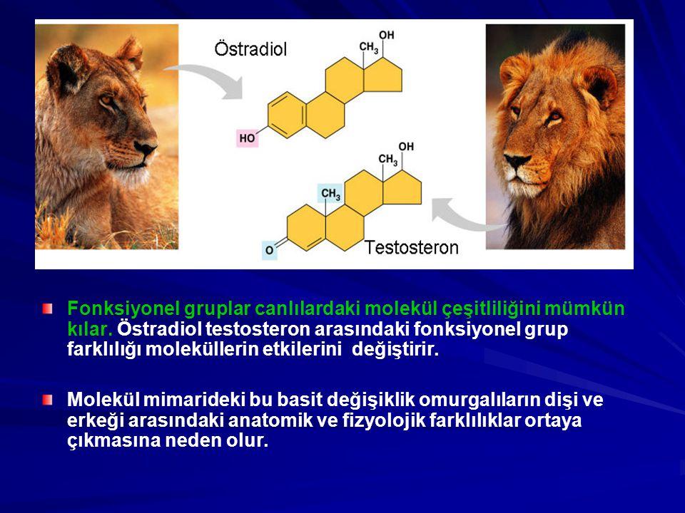 Fonksiyonel gruplar canlılardaki molekül çeşitliliğini mümkün kılar