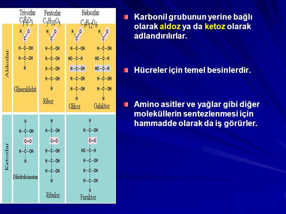 Karbonil grubunun yerine bağlı olarak aldoz ya da ketoz olarak adlandırılırlar.