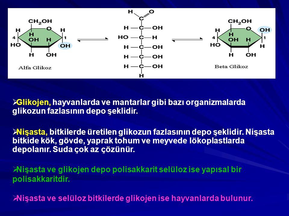 Glikojen, hayvanlarda ve mantarlar gibi bazı organizmalarda glikozun fazlasının depo şeklidir.