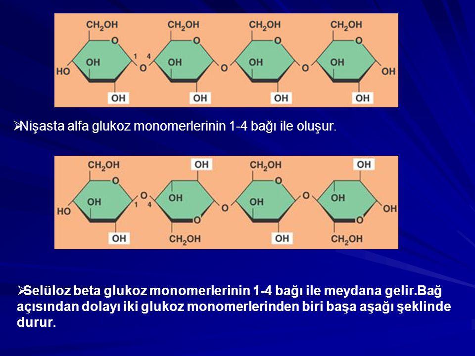 Nişasta alfa glukoz monomerlerinin 1-4 bağı ile oluşur.