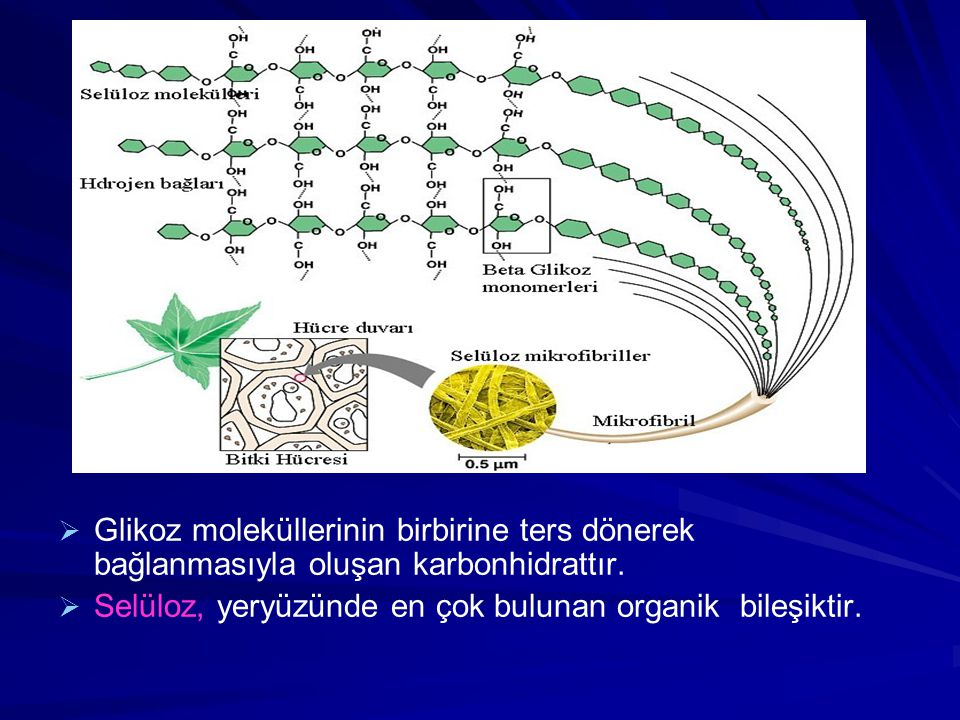 Glikoz moleküllerinin birbirine ters dönerek bağlanmasıyla oluşan karbonhidrattır.