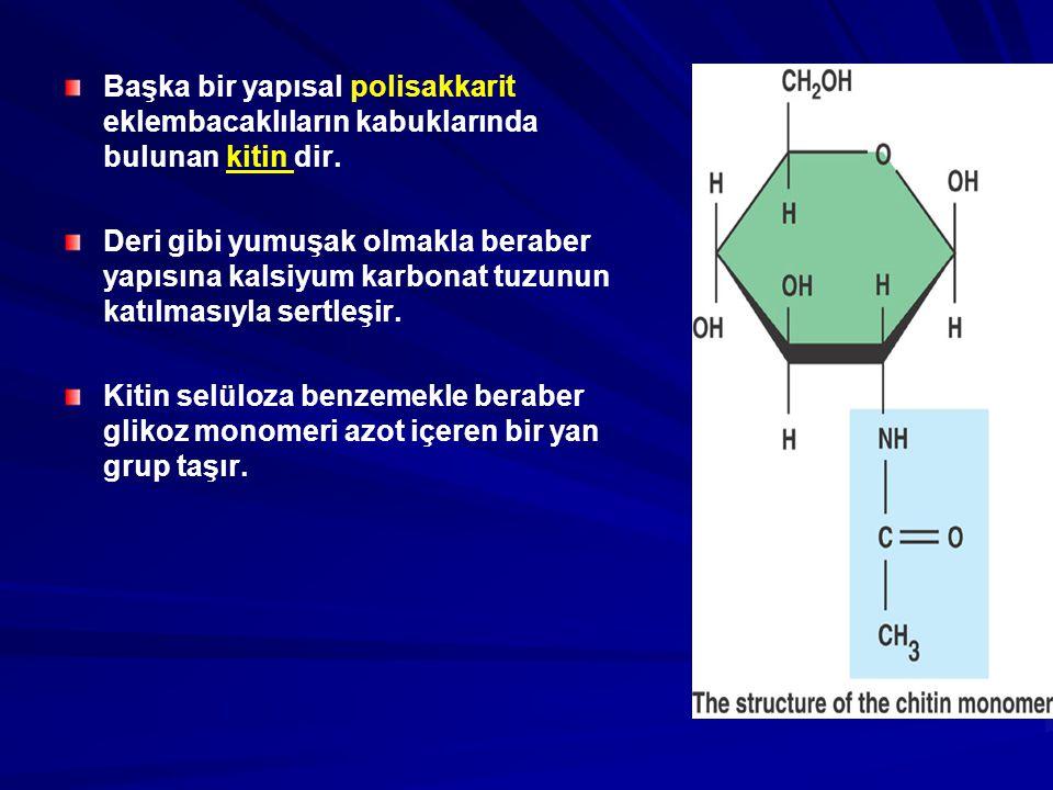 Başka bir yapısal polisakkarit eklembacaklıların kabuklarında bulunan kitin dir.