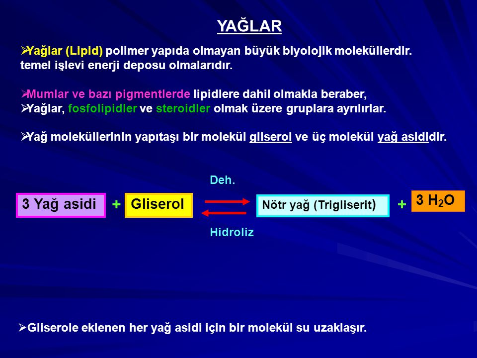 YAĞLAR + + 3 H2O 3 Yağ asidi Gliserol