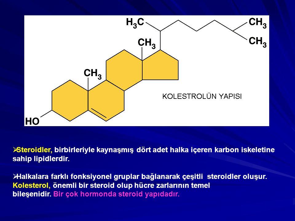 Steroidler, birbirleriyle kaynaşmış dört adet halka içeren karbon iskeletine