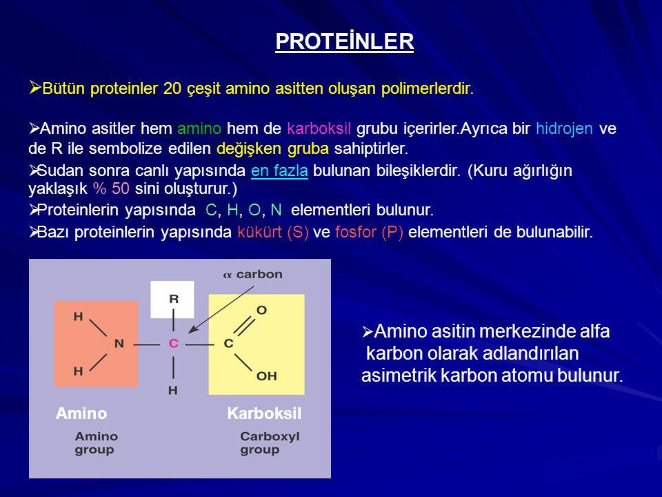 PROTEİNLER Bütün proteinler 20 çeşit amino asitten oluşan polimerlerdir.