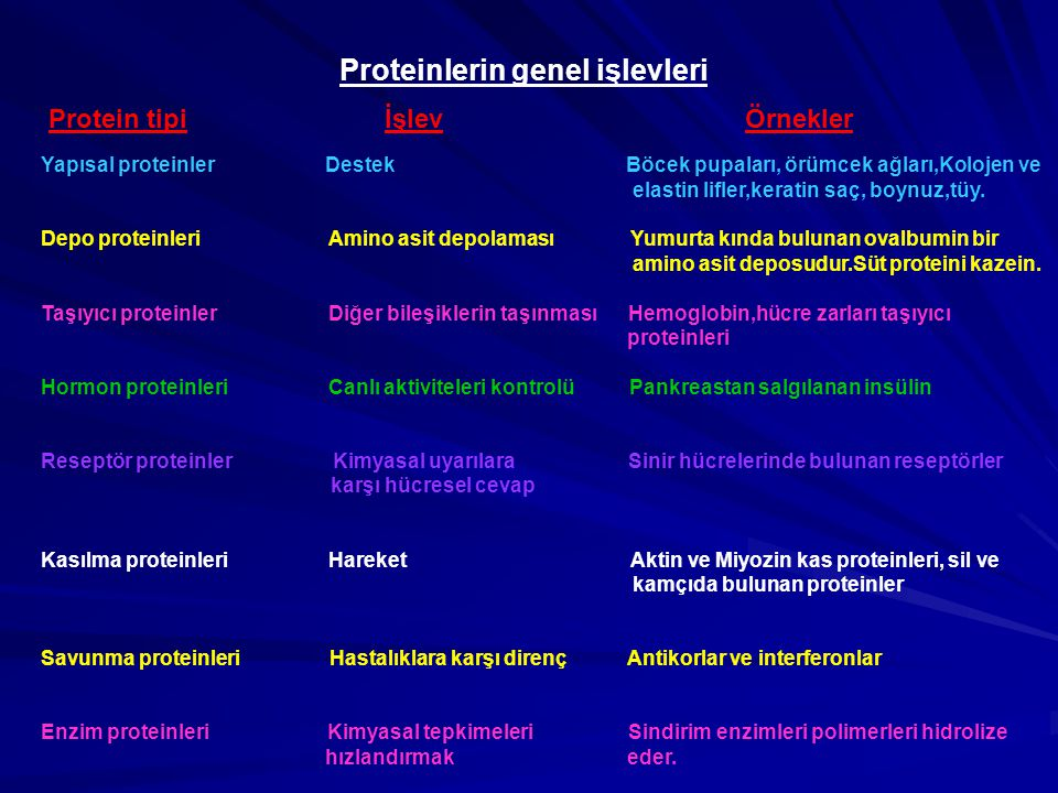 Proteinlerin genel işlevleri