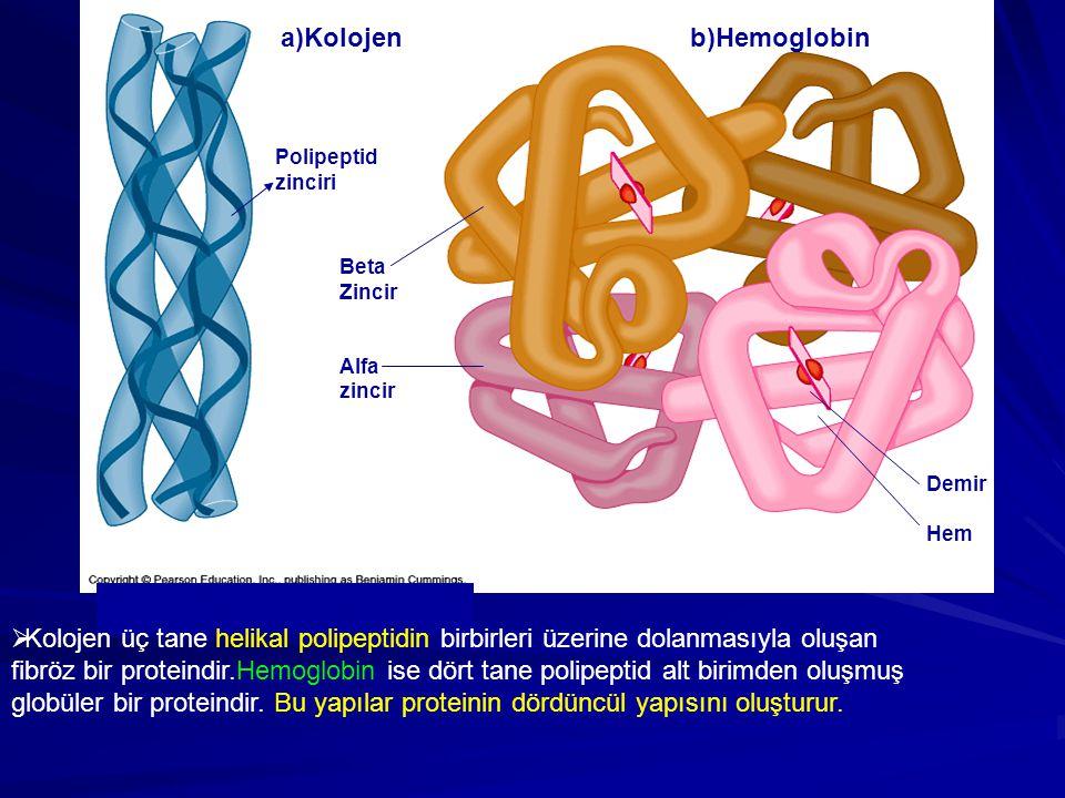 a)Kolojen b)Hemoglobin