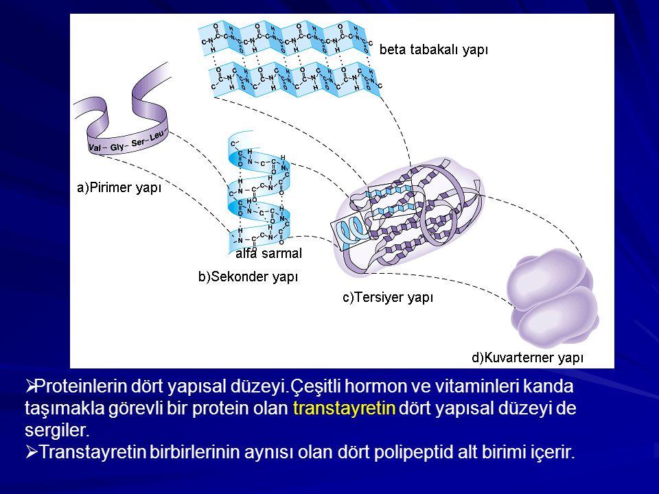 Proteinlerin dört yapısal düzeyi