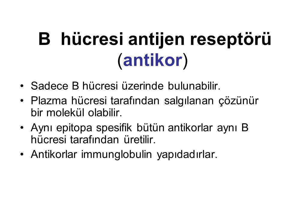 B hücresi antijen reseptörü (antikor)