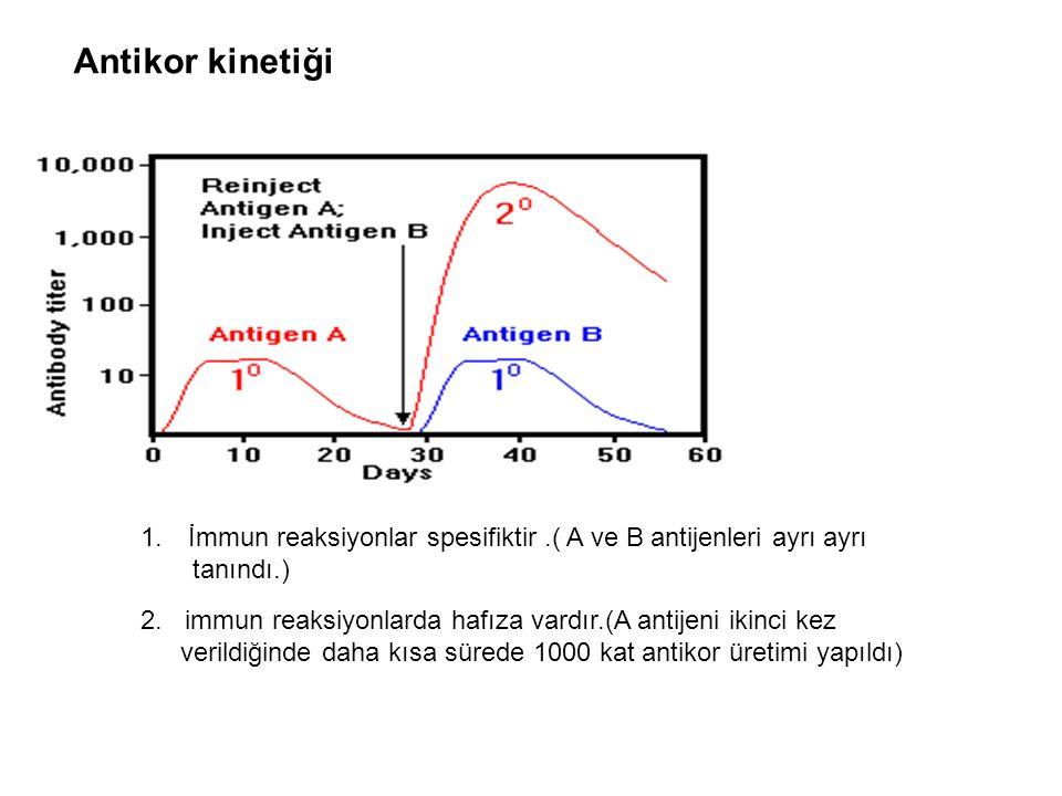 Antikor kinetiği İmmun reaksiyonlar spesifiktir .( A ve B antijenleri ayrı ayrı. tanındı.)