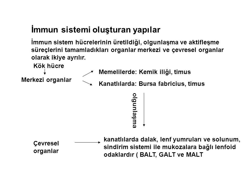 İmmun sistemi oluşturan yapılar