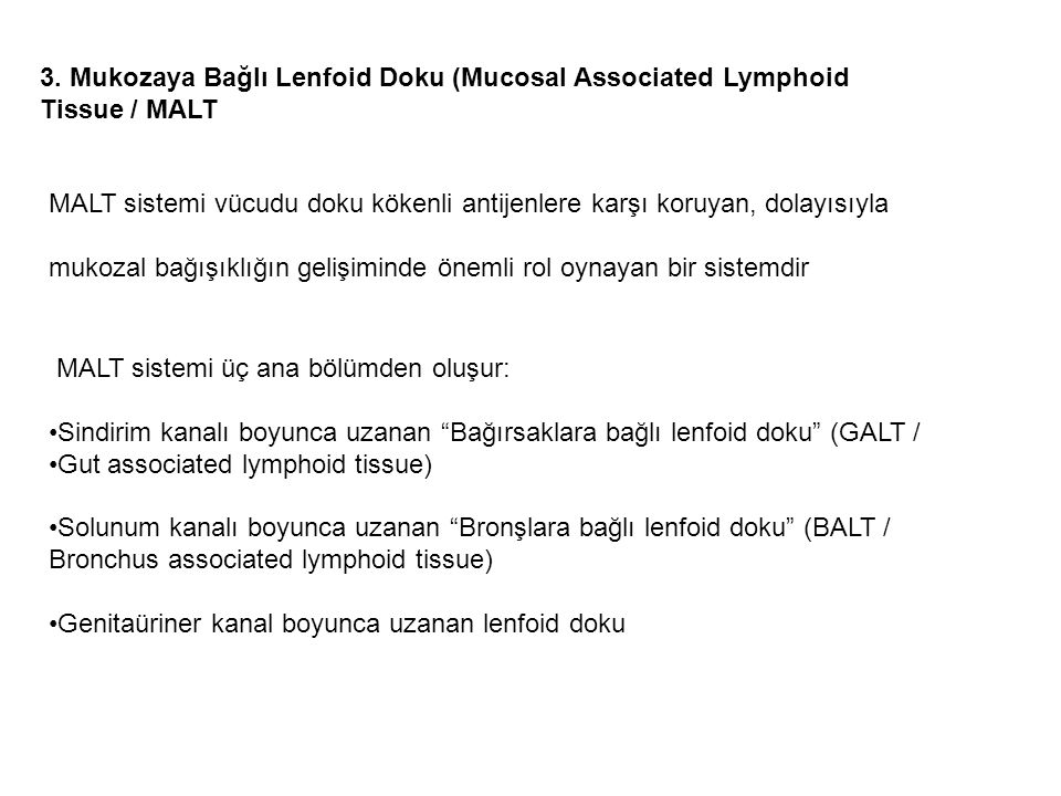 3. Mukozaya Bağlı Lenfoid Doku (Mucosal Associated Lymphoid Tissue / MALT