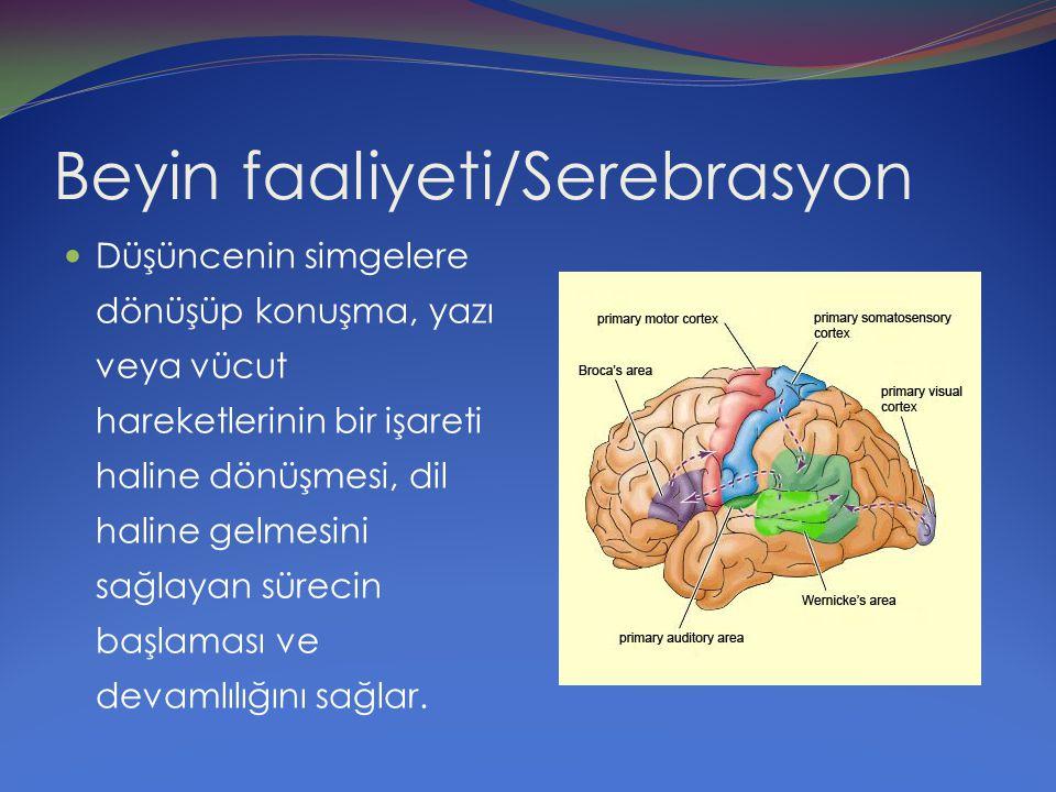 Beyin faaliyeti/Serebrasyon