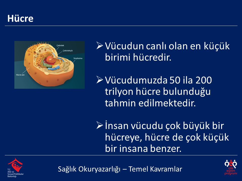 Vücudun canlı olan en küçük birimi hücredir.