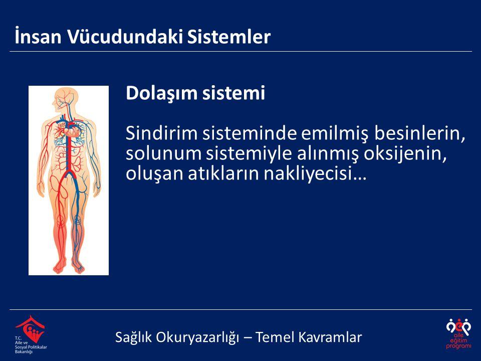 İnsan Vücudundaki Sistemler