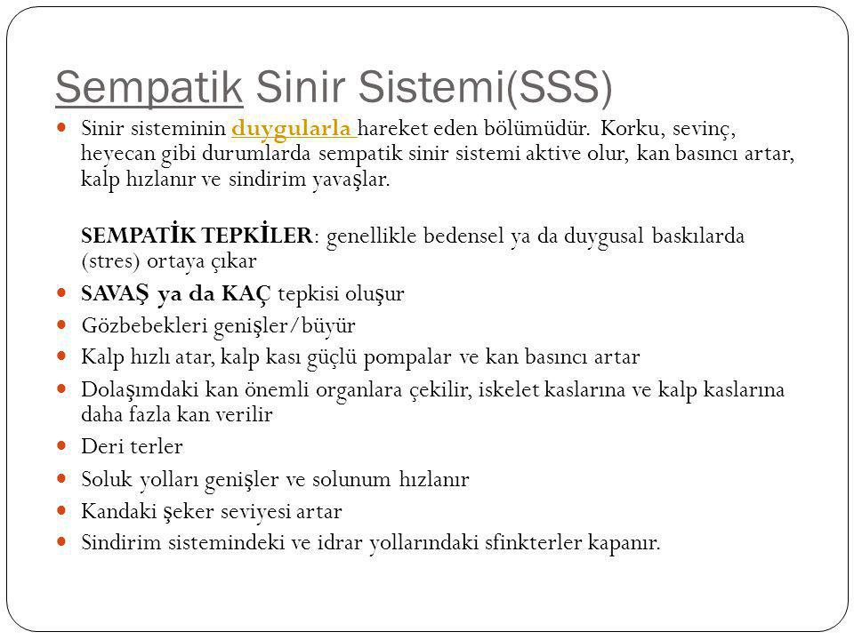 Sempatik Sinir Sistemi(SSS)