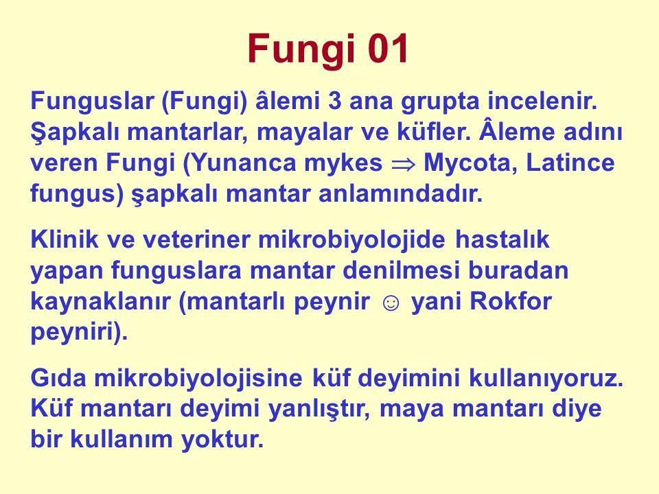 Fungi 01
