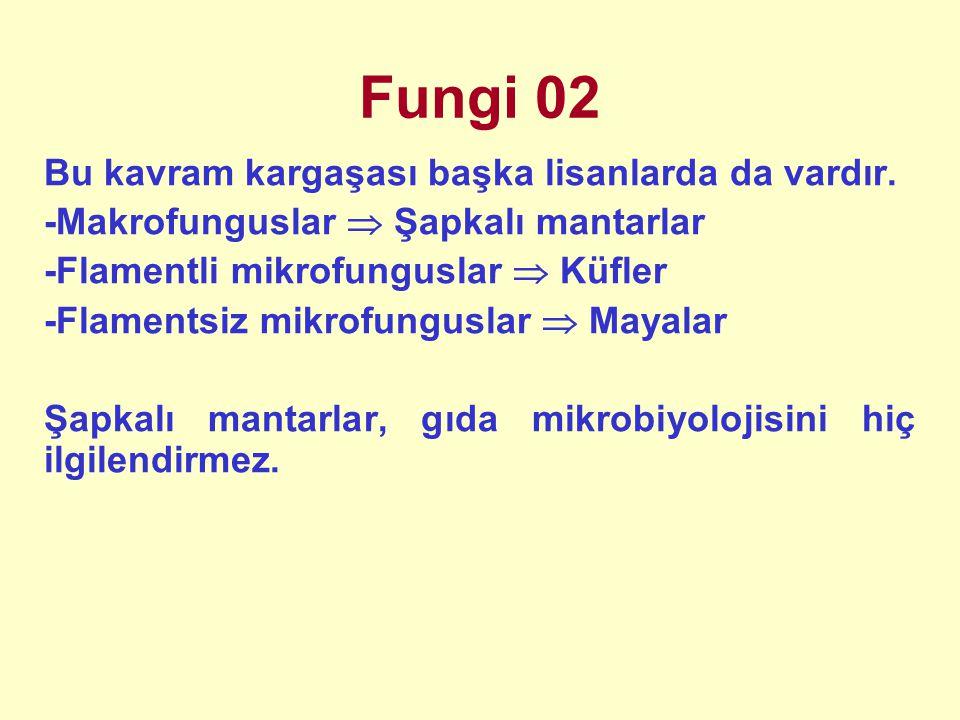 Fungi 02 Bu kavram kargaşası başka lisanlarda da vardır.