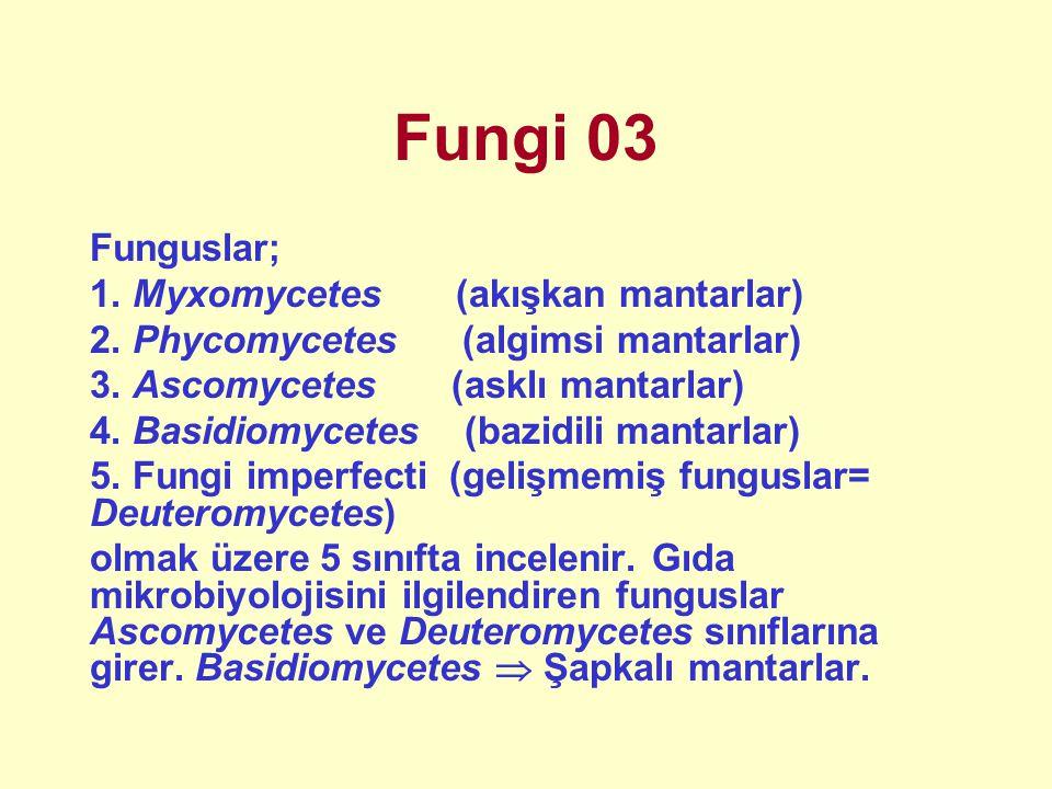 Fungi 03 Funguslar; 1. Myxomycetes (akışkan mantarlar)