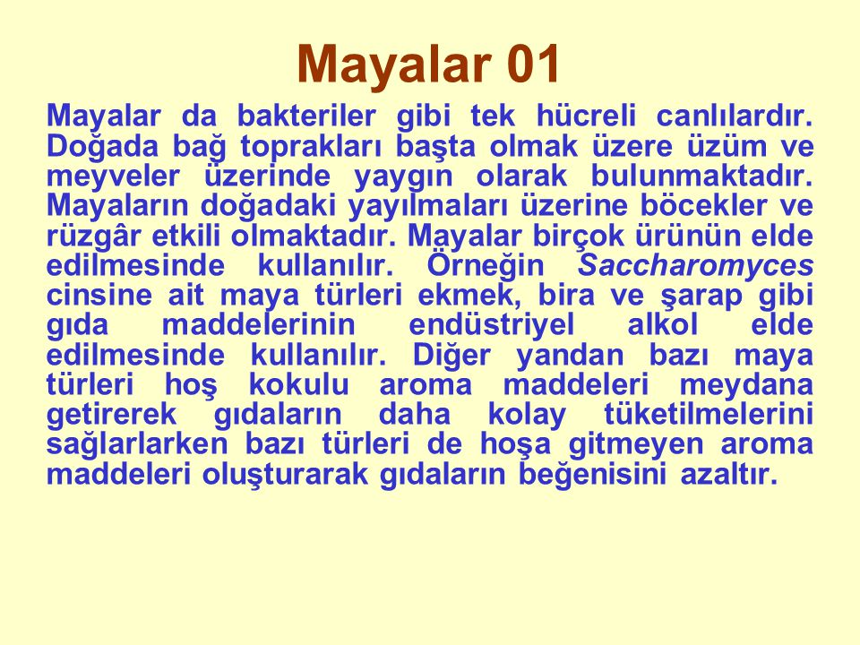 Mayalar 01