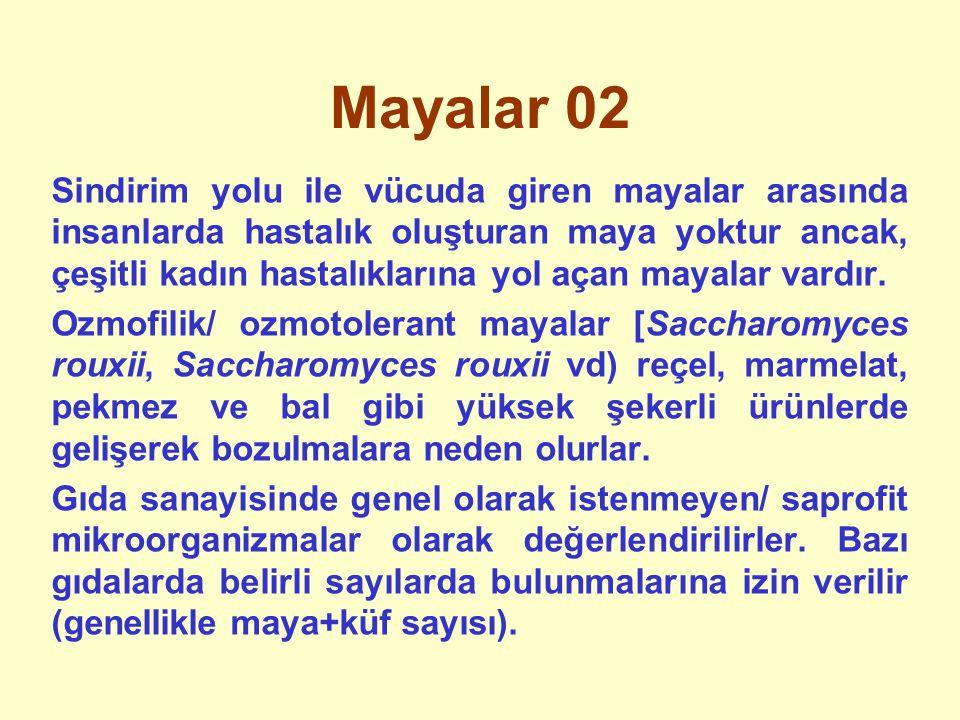 Mayalar 02