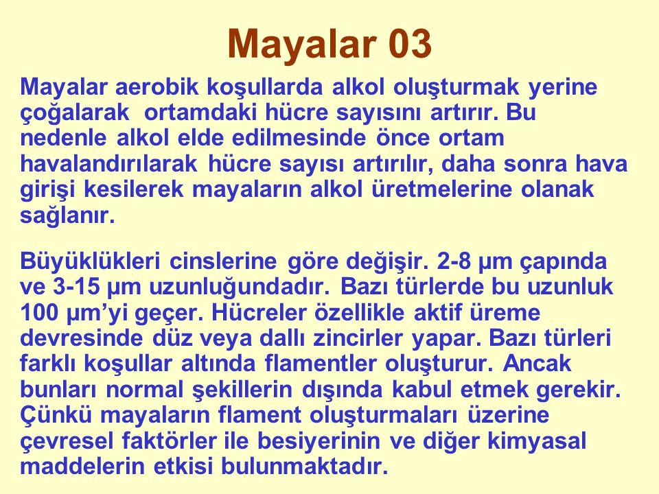 Mayalar 03
