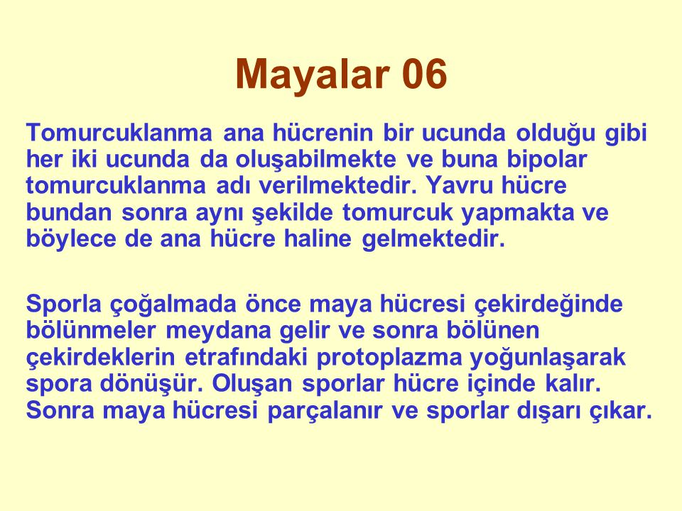 Mayalar 06