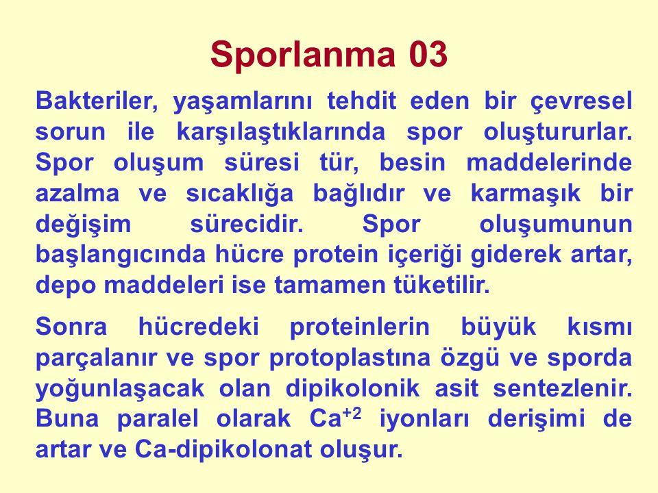 Sporlanma 03