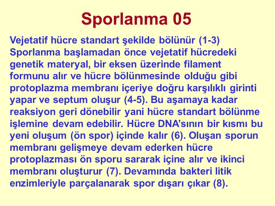 Sporlanma 05