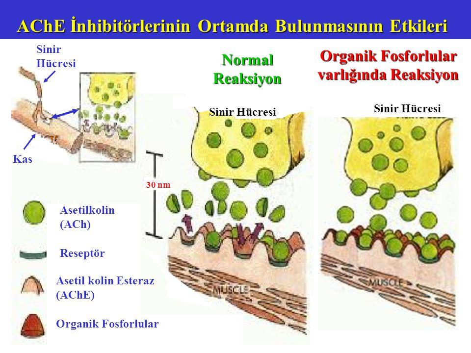 Organik Fosforlular varlığında Reaksiyon