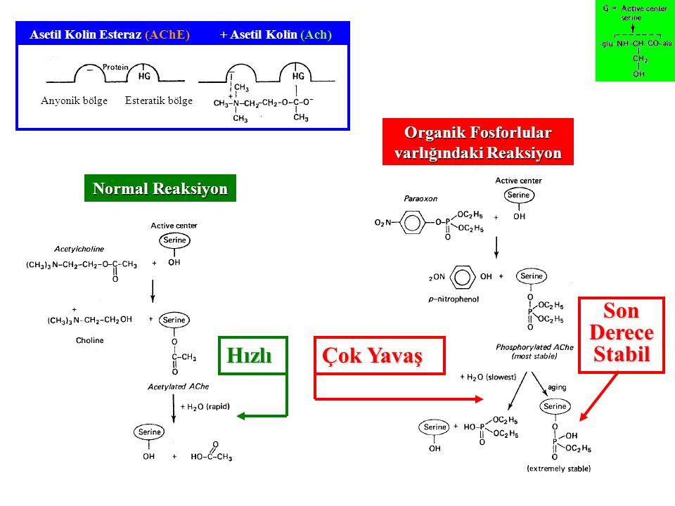 Asetil Kolin Esteraz (AChE) Organik Fosforlular varlığındaki Reaksiyon