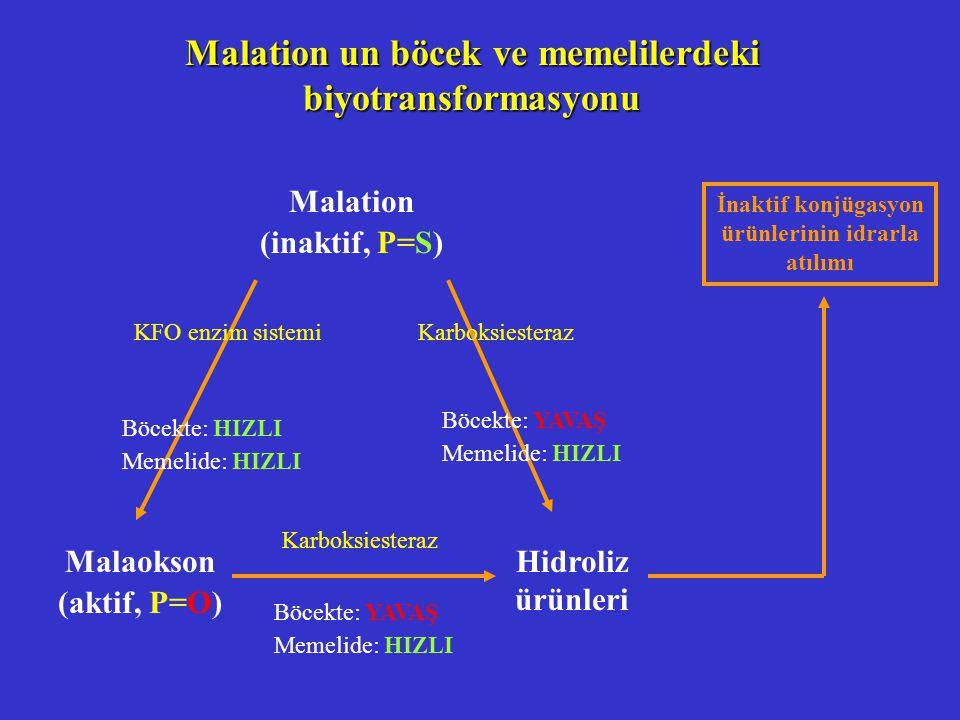 Malation un böcek ve memelilerdeki biyotransformasyonu