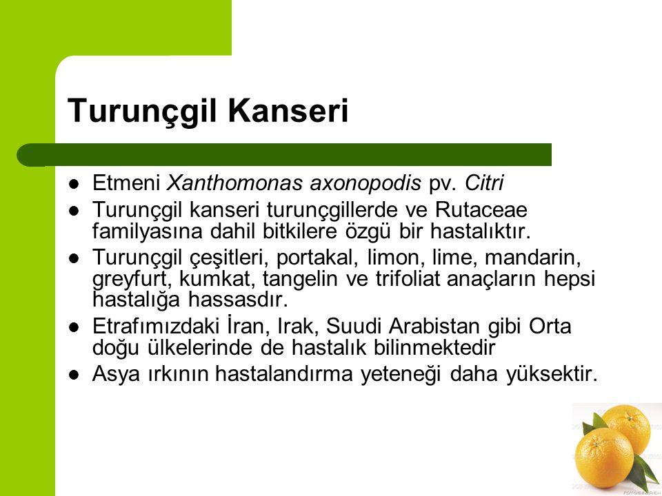 Turunçgil Kanseri Etmeni Xanthomonas axonopodis pv. Citri