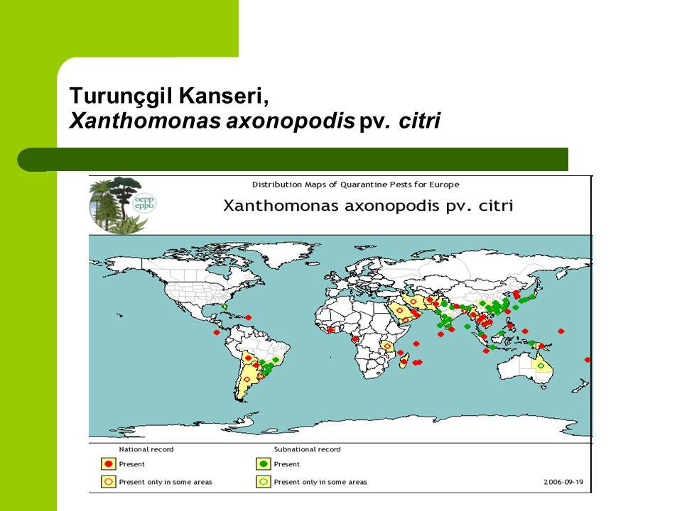 Turunçgil Kanseri, Xanthomonas axonopodis pv. citri