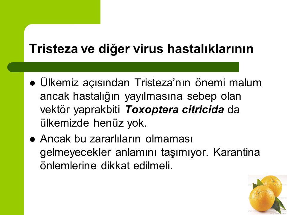 Tristeza ve diğer virus hastalıklarının