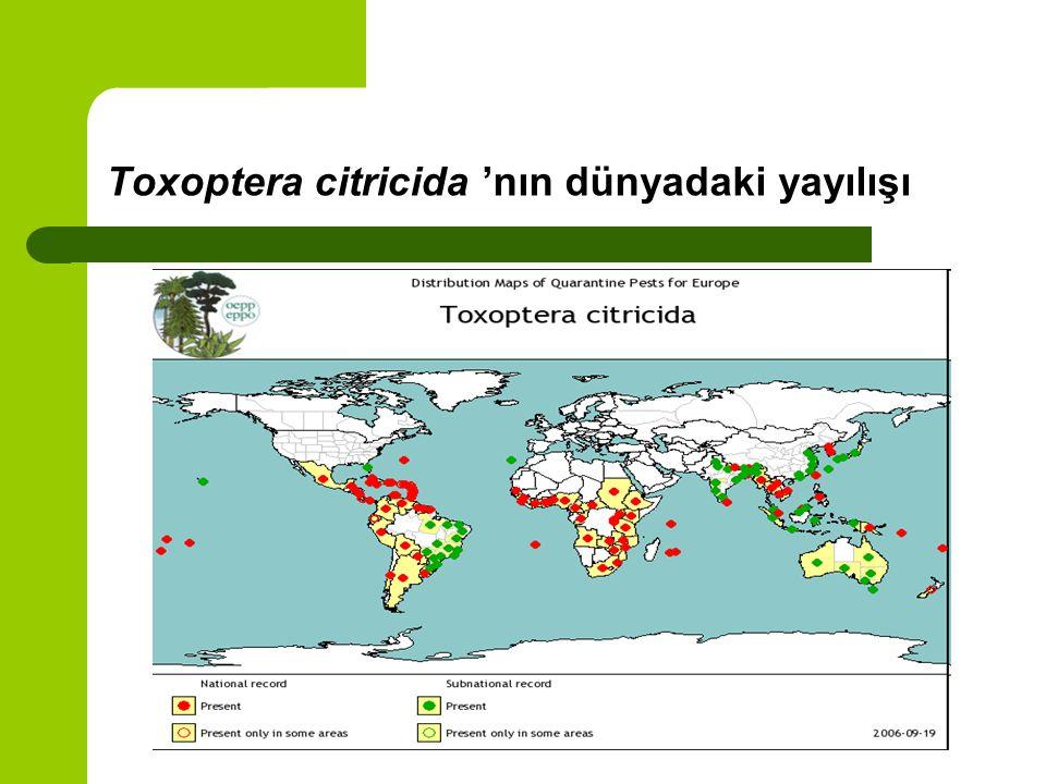 Toxoptera citricida 'nın dünyadaki yayılışı