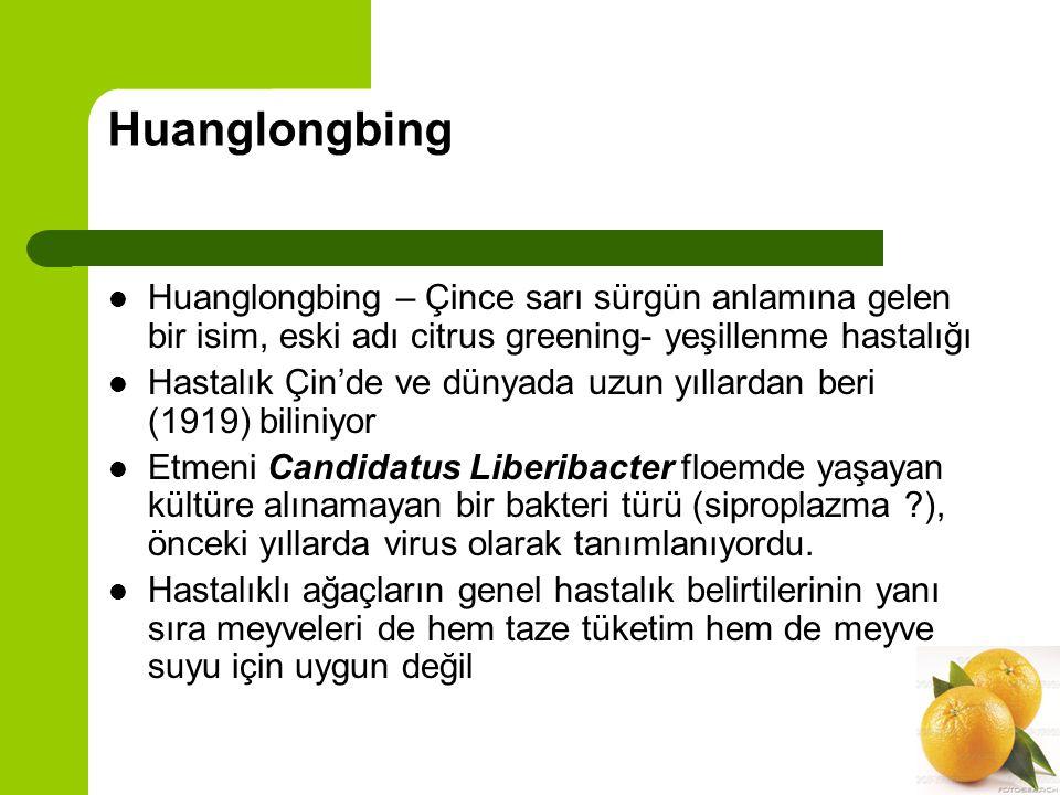 Huanglongbing Huanglongbing – Çince sarı sürgün anlamına gelen bir isim, eski adı citrus greening- yeşillenme hastalığı.