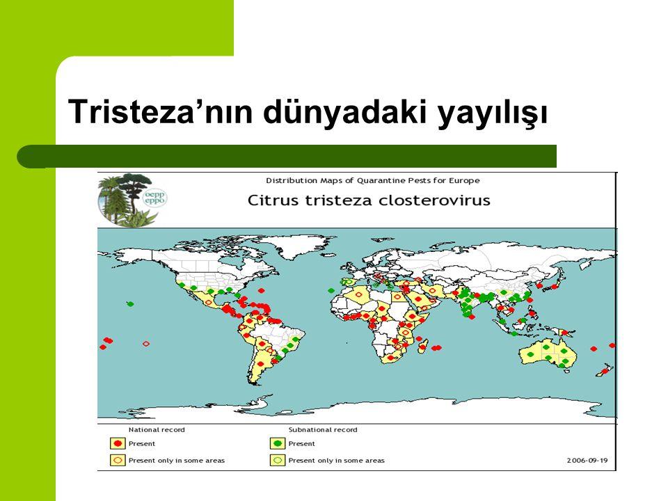 Tristeza'nın dünyadaki yayılışı
