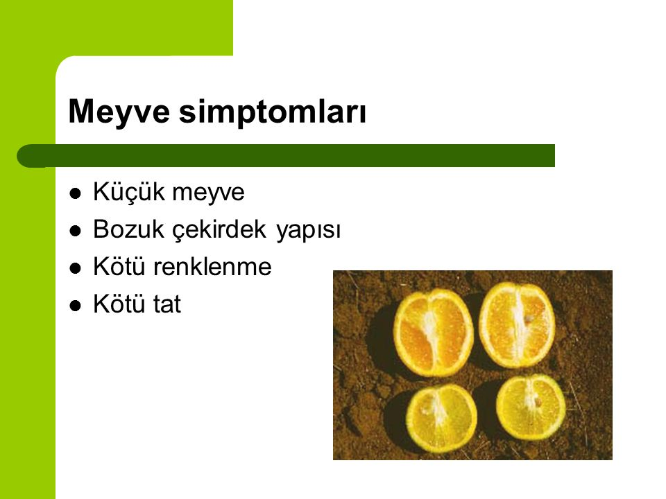 Meyve simptomları Küçük meyve Bozuk çekirdek yapısı Kötü renklenme