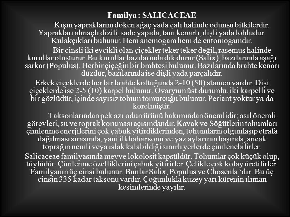 Familya : SALICACEAE