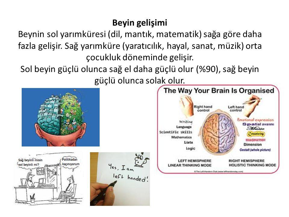 Beyin gelişimi