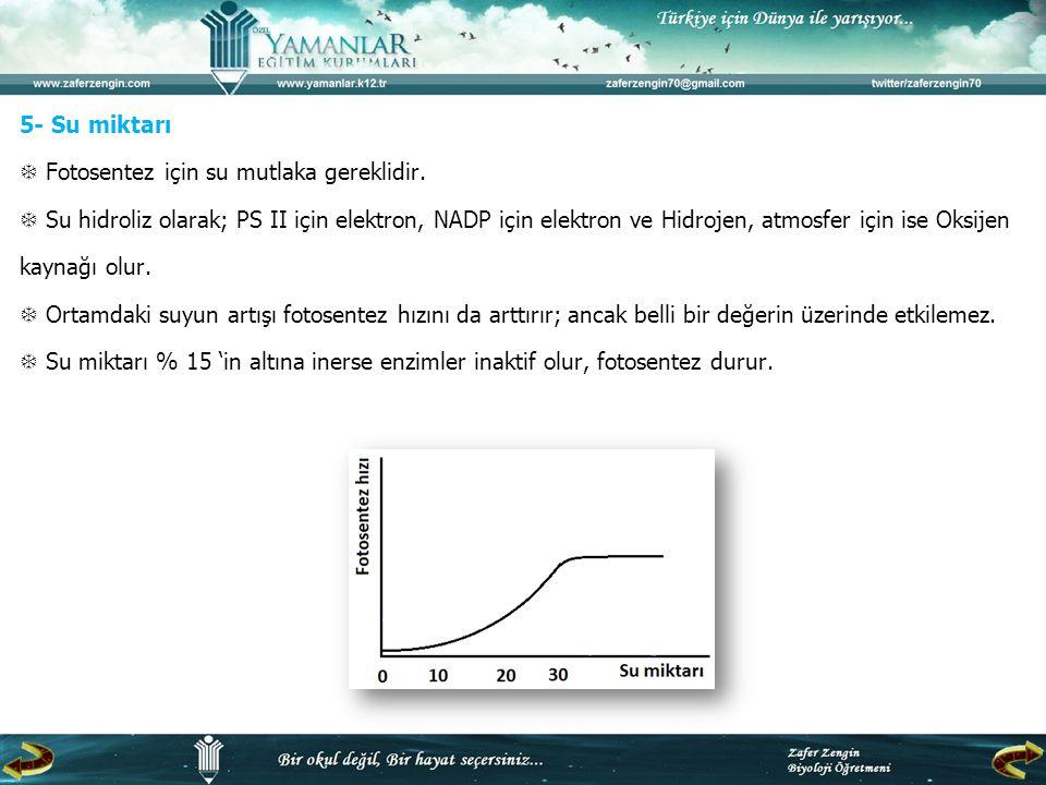 5- Su miktarı  Fotosentez için su mutlaka gereklidir
