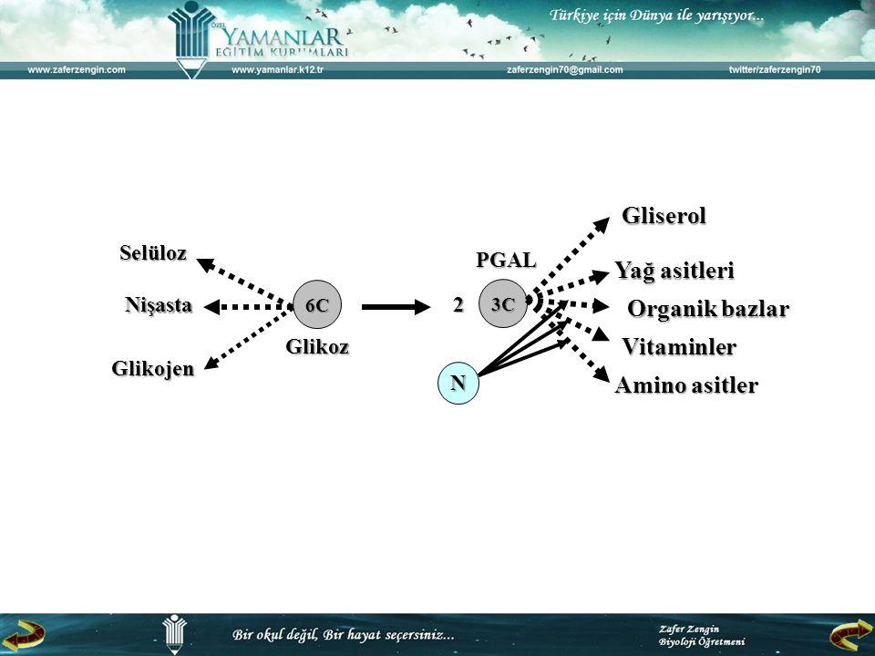 Gliserol Yağ asitleri Organik bazlar Vitaminler Amino asitler Selüloz