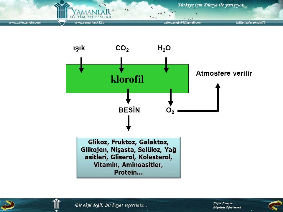 klorofil ışık CO2 H2O Atmosfere verilir BESİN O2