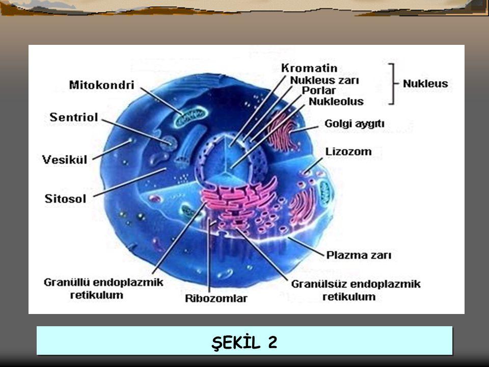 ŞEKİL 2